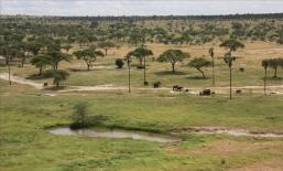 Tarangire landscape